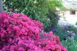 scottsdale_bbq_2012_12