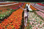 Tulips_2016_06